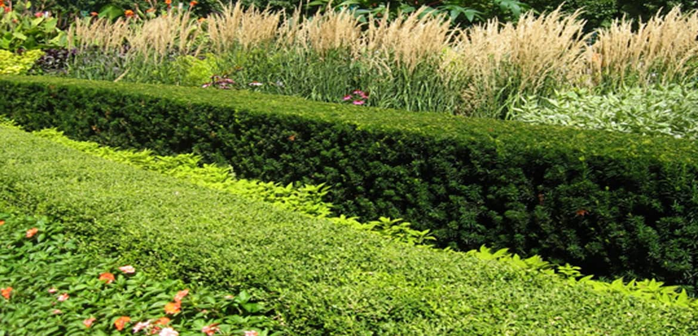 2 Planting Design