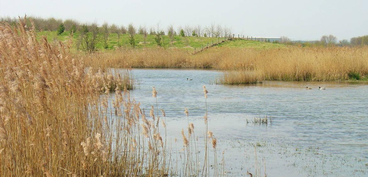 Landscape Management 4