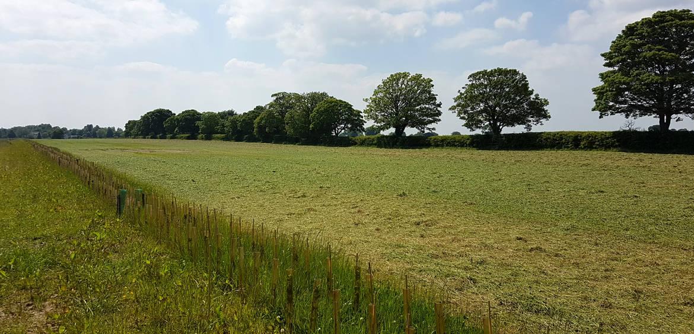 Landscape Management 5